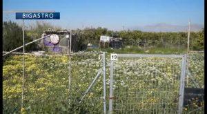 Bigastro implanta una normativa para que los usuarios practiquen agricultura ecológica