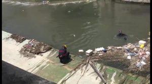Rescatan a un pato atrapado en el cauce del río Segura