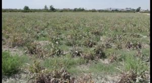 Dolores analiza la situación de emergencia de la Vega Baja por la falta de agua