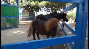 Granja de Rocamora ofrece la única escuela de verano de la comarca con actividades con animales