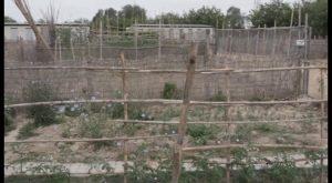 Rojales acoge tres talleres agrícolas para todos los públicos
