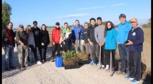 Plantan 400 árboles en Guardamar para recuperar el bosque de ribera del río Segura