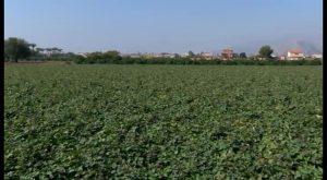 Garantizar el agua para regadío en la Vega Baja solo está en manos de los trasvases y de las lluvias