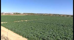 """Consecuencias nefastas de la sequía. Piden al Ministerio un """"riego de socorro"""" del Trasvase"""