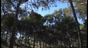 Guardamar recrea una de las mayores repoblaciones forestales que se recuerdan en España