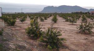 Regantes de Albatera pedirá a la administración central que no deje morir de sed los cultivos