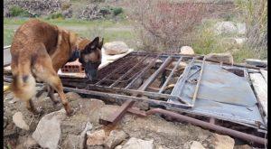Equipos caninos especializados de rescate de Cox colaboran en la búsqueda del niño de Almería