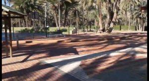 Medio Ambiente actúa en más de 4.000 palmeras en el Palmeral de San Antón
