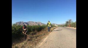 Albatera contrata a 52 personas para las labores de peón agrícola