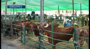 Dolores prepara ya la Feria del Ganado más importante de la Comunidad Valenciana