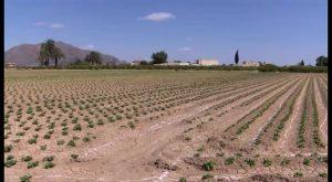 ASAJA exige al nuevo Gobierno de España que deje de avivar la sucia guerra del agua