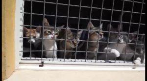 Continúa el incremento de animales abandonados durante el verano