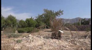 La Asociación Palmeral Vivo denuncia que el Palmetum de Orihuela se está secando
