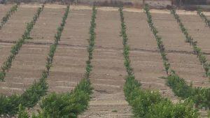 El cierre del trasvase hasta mayo provocó pérdidas en hortalizas de hasta un 50%