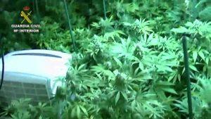 Detenidas en Torrevieja 21 personas por cultivo y suministro de sustancias estupefacientes