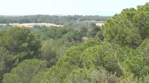 Reclaman brigadas forestales para preservar Sierra Escalona