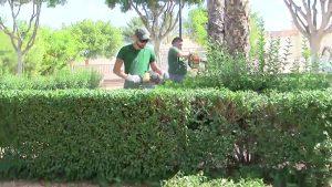Manos jóvenes para los jardines de Formentera