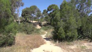 Un macro proyecto reforestará y dará esplendor a la pinada de Guardamar
