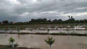 Catástrofe agrícola en la Vega Baja