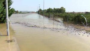 Nuevos ayuntamientos se suman a la petición para declarar sus municipios como zona catastrófica