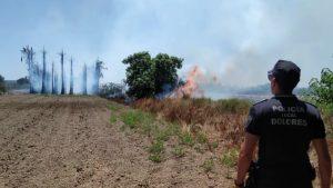Un incendio arrasa un huerto de palmeras en Daya Nueva