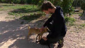 Aumenta el abandono animal en verano y disminuye el voluntariado