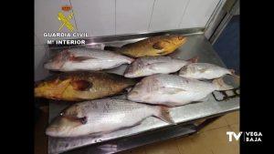 La Guardia Civil incauta en Torrevieja 800 kilos de pescado de origen y características irregulares
