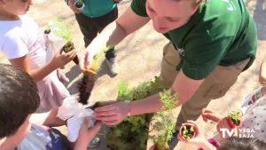 Plantación de árboles en Almoradí