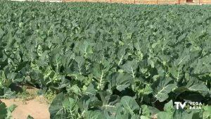 Balance positivo para el sector de la agricultura en pleno estado de alarma