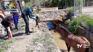 La Guardia Civil rescata a un caballo que había caído a una acequia en Jacarilla