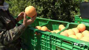 La crisis del coronavirus realza el valor de los cítricos y perjudica el sector ganadero