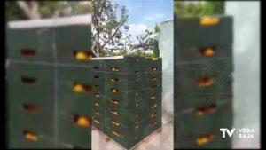 15 toneladas de fruta y verdura de la comarca llegan al Banco de Alimentos de Madrid
