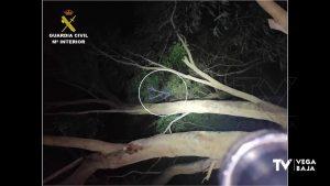 Detenido en Guardamar un hombre que estuvo subido a un árbol 3 horas para evitar ser detenido