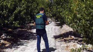 Tres oriolanos detenidos por estafar presuntamente 120.000 euros a agricultores de Murcia
