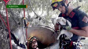 Los bomberos intervienen en varios rescates de animales a lo largo de la jornada