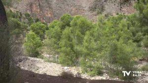 El PSOE de Orihuela asegura que el Gobierno local desmontará la zona recreativa del Pinar de Bonanza