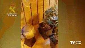 Invernaderos de marihuana en armarios. Ha ocurrido en Torrevieja