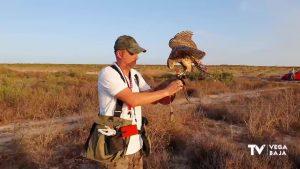 Uso de aves rapaces para un control selectivo de plagas de conejos en cultivos