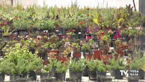 La zona de invernaderos de Benejúzar comienza a recuperar su valor medioambiental