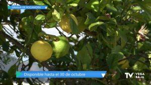 Campaña contra la mosca de la fruta en Granja de Rocamora
