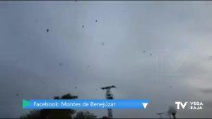 Los murciélagos sobrevuelan el cielo de la Vega Baja en busca de hormigas voladoras como cada otoño