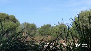 Rojales se incorpora a la Red de Municipios para la adaptación de los insectos polinizadores