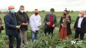 Arranca la temporada de alcachofa: se espera una producción de 22.000 toneladas