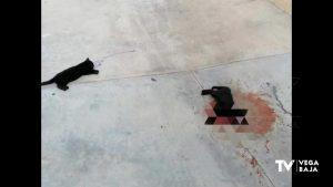 Los colectivos animalistas denuncian la trágica muerte de dos gatos en Rocío del Mar