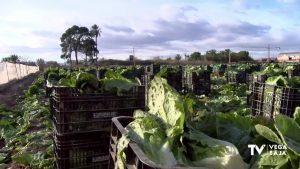 La escarcha amenaza la producción de lechugas, habas y alcachofas