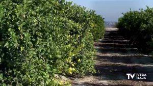 Filomena y el frío disparan los precios de las hortalizas