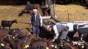 Los ganaderos calculan pérdidas de entre 500.000 y dos millones de euros al cerrar la hostelería