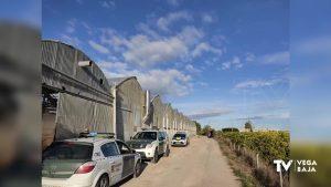 Incautan 10.300 plantas de marihuana en un invernadero de Cox