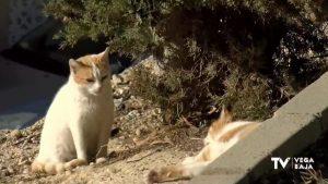 La esterilización de colonias felinas urbanas: una apuesta para el control de plagas