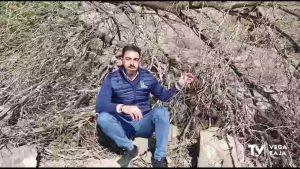El cactus de Arizona en la sierra de Orihuela será retirado por parte de voluntarios